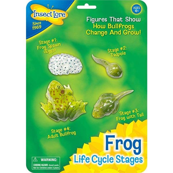 Frog life cycle, kikker levenscycles