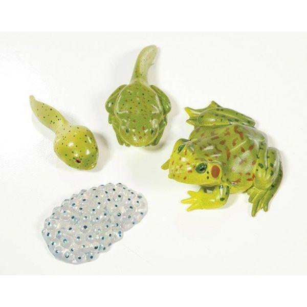 Inhoud pakket, frog life cycle