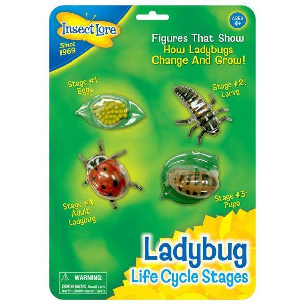 Lieveheersbeestje levenscyclus