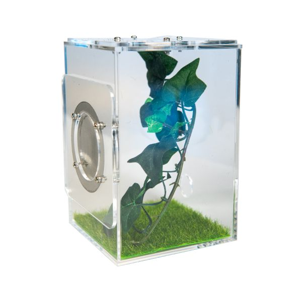 Big Insect Stay, 10x10x15