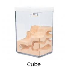 Ant Farm cube