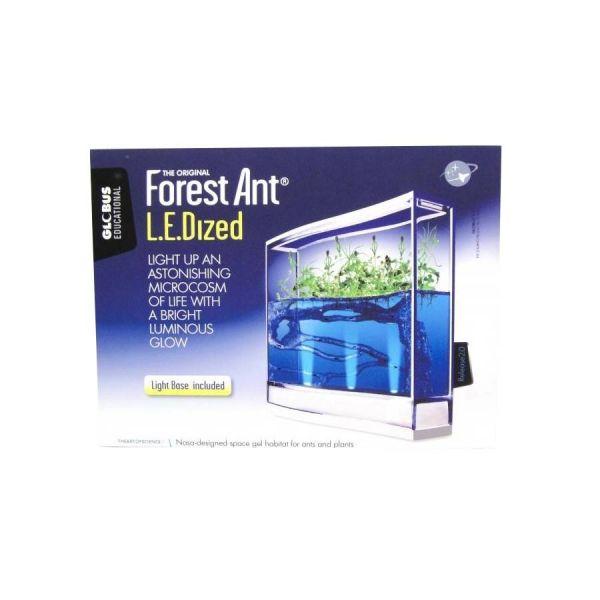 Frontview forest ant ledlight