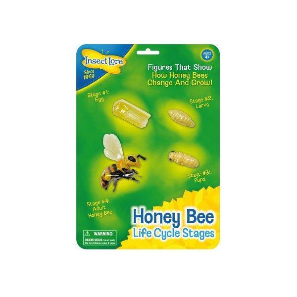 Bij levenscyclus, honey bee life cycle stages