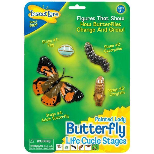 Vlinder levenscyclus